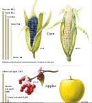 Nutritional Weaklings in the Supermarket (New York Times 5/26/13